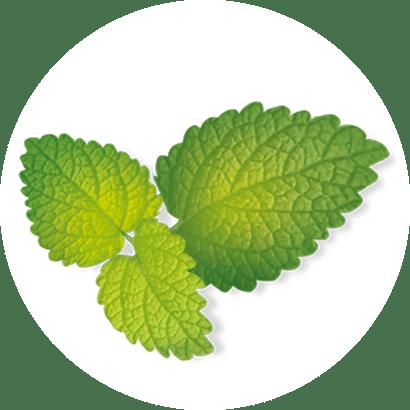 výťažky z citrusov